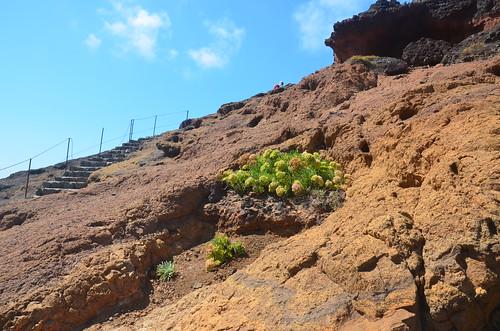 Stufen und Kakteen im Gestein