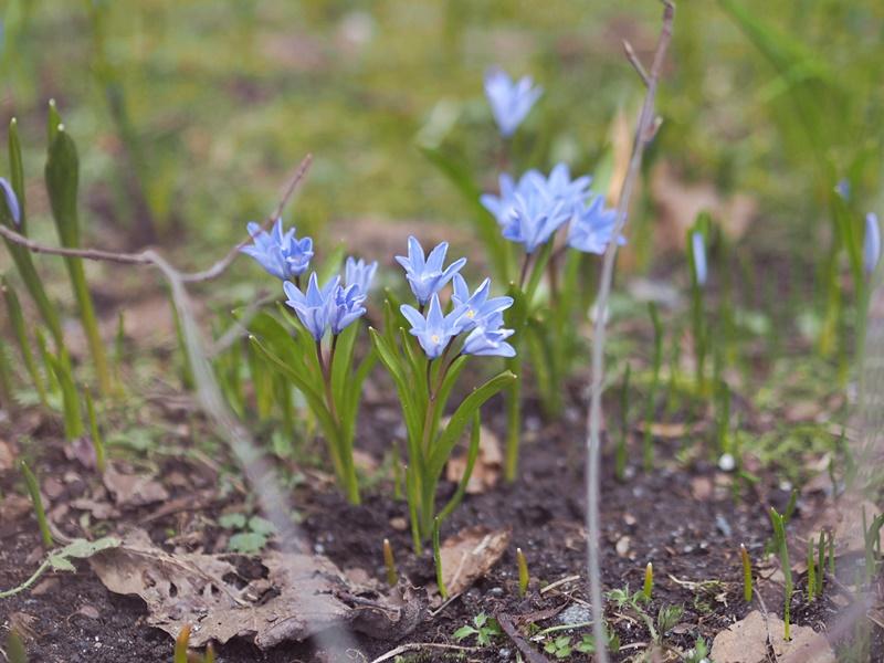 kevät kukkia suomi nature
