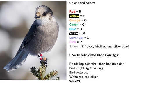Gray Jay Band Guide L
