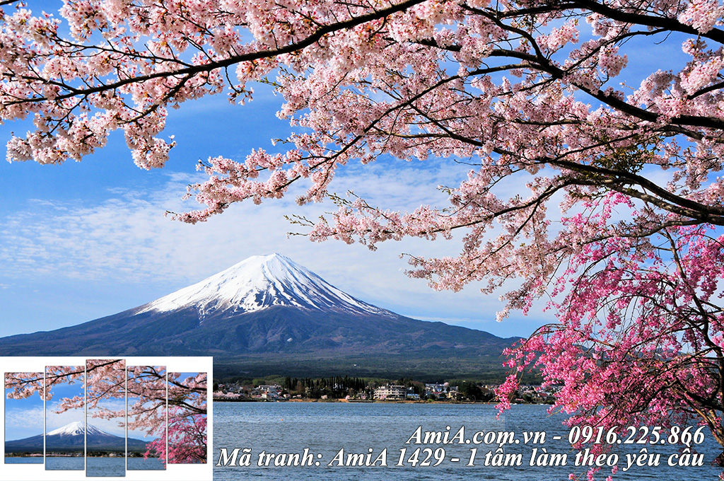 Tranh phong cảnh đẹp Nhật Bản Núi Phú Sỹ Hoa Anh Đào