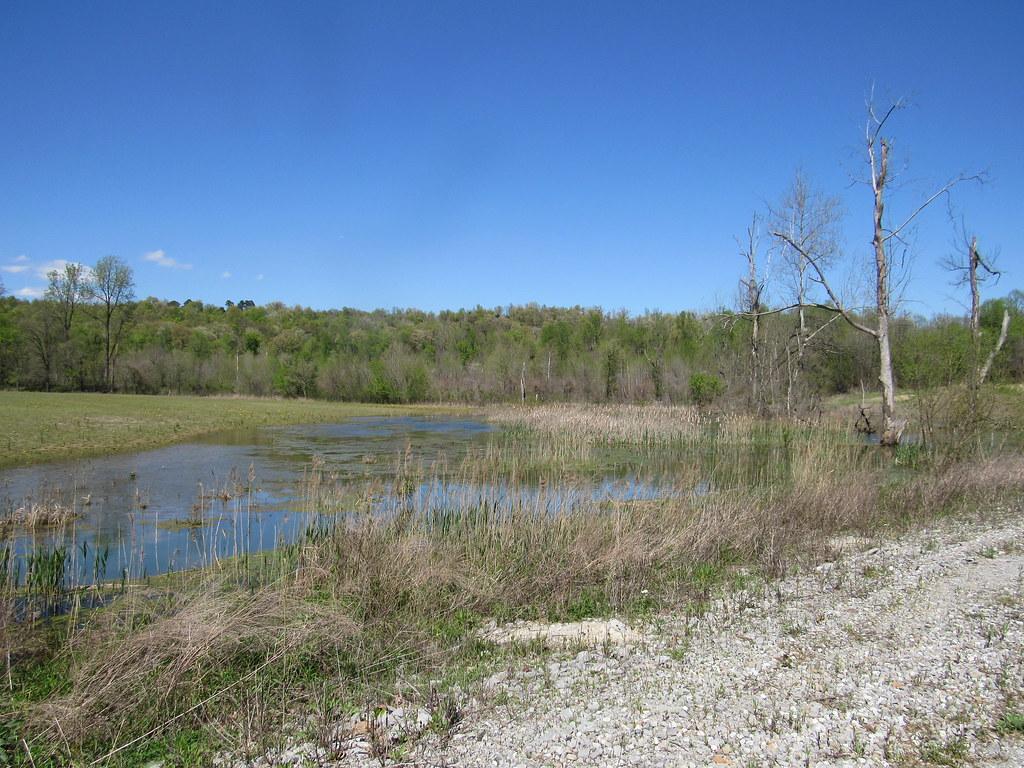 Small Wetlands in Hardin