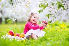 Happy toddler girl eating apple in blooming garden