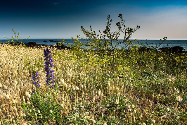 Fleurs en bord de mer / Flowers by the sea