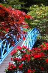 Johnstone Gardens Aberdeen