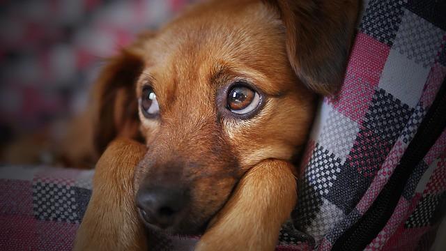 台風にそなえてクレートでハウスできるようになった犬