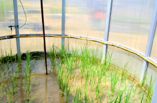 कक्ष के अन्दर उगाये गये पौधे