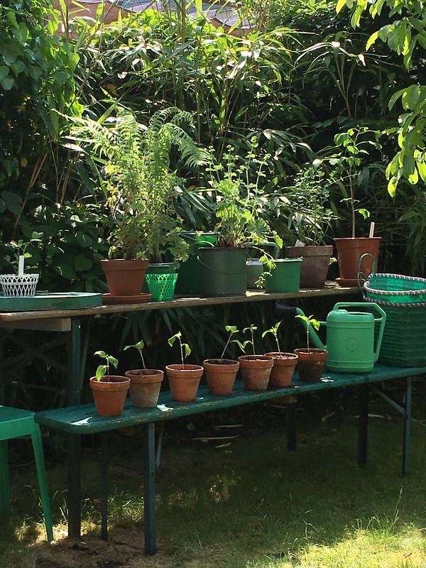 backyard vibes