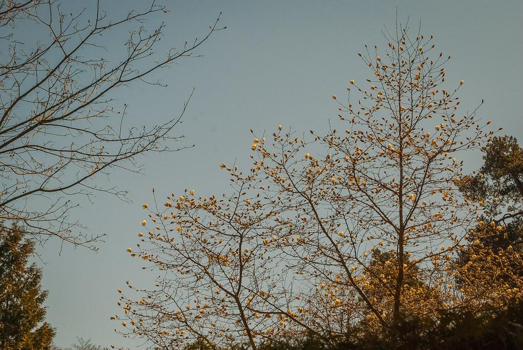 Spring it is ! 12:33:03 DSC_7134