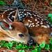 Bambi vs. Godzilla by snapdragginphoto