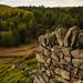 Dry stone wall, Langsett