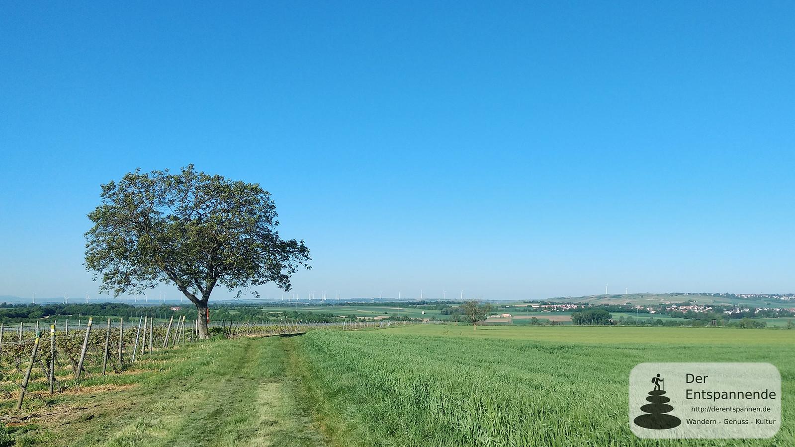 SunriseRun zwischen Nierstein und Mommenheim