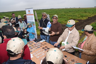 Wed, 05/09/2018 - 11:21 - Shiv Kumar Agrawal, a Lentil Breeder at ICARDA, introduces visitors to different legumes varieties grown at the Marrchouch Research Station.