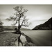 Lone Tree. Ullswater, Cumbria. by Paul Greeves