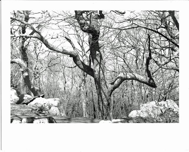 Tree at Skyland - 9x6 print