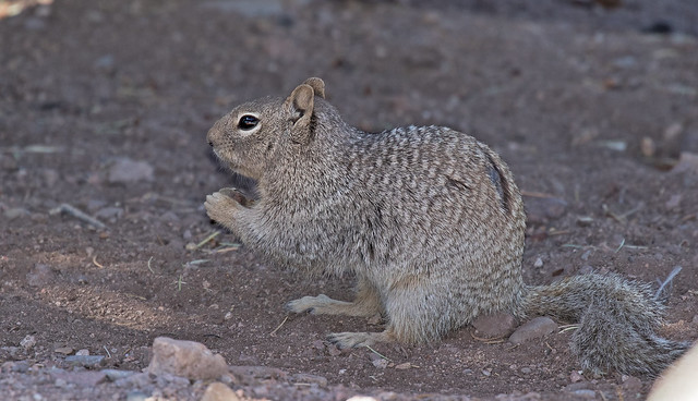 Squirrel-9-7D2-050818