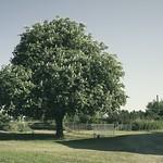 20180514-162955 Tree