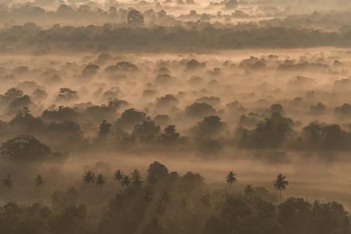 srilanka sigiriya pidurangalarock jungle landscape fog nature sun canon trees sunrise