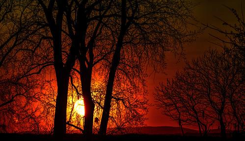 2018 canada châteauguay coucherdesoleil exterior extérieur héritagesaintbernard ilesaintbernard lightroomcc maii may michelguérin nature nikon nikonafsnikkor200500mmf56eedvr nikond500 qc québec refugefauniquemargueritedyouville sunset trees arbres