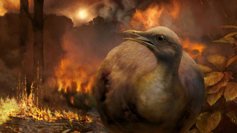 Artist's reconstruction of a partridge-like bird fleeing from a burning forest