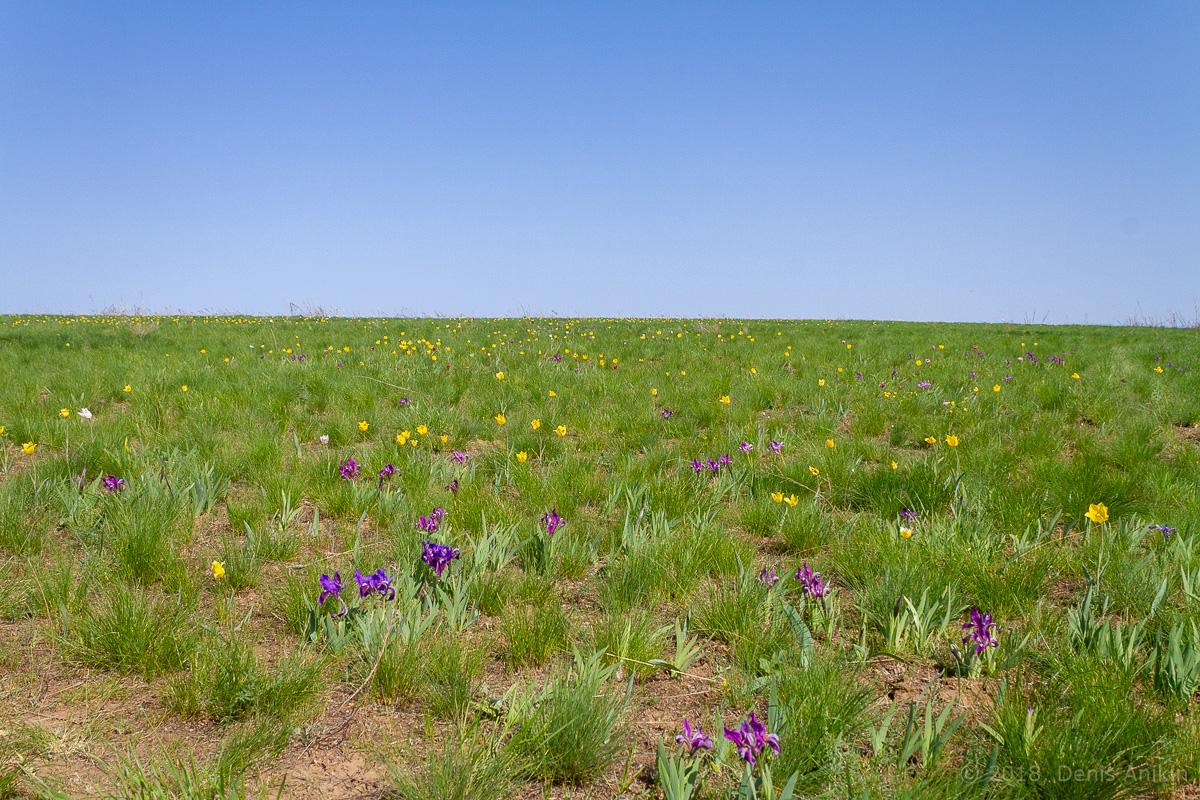 ирисы иваново поле саратовская область фото 1