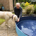 Chris tries to persuade Teddy the new dog pool is not scary
