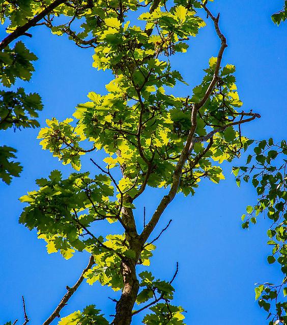 Very green leaves