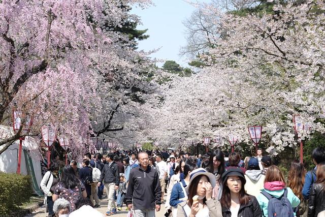 Full of sakura and people
