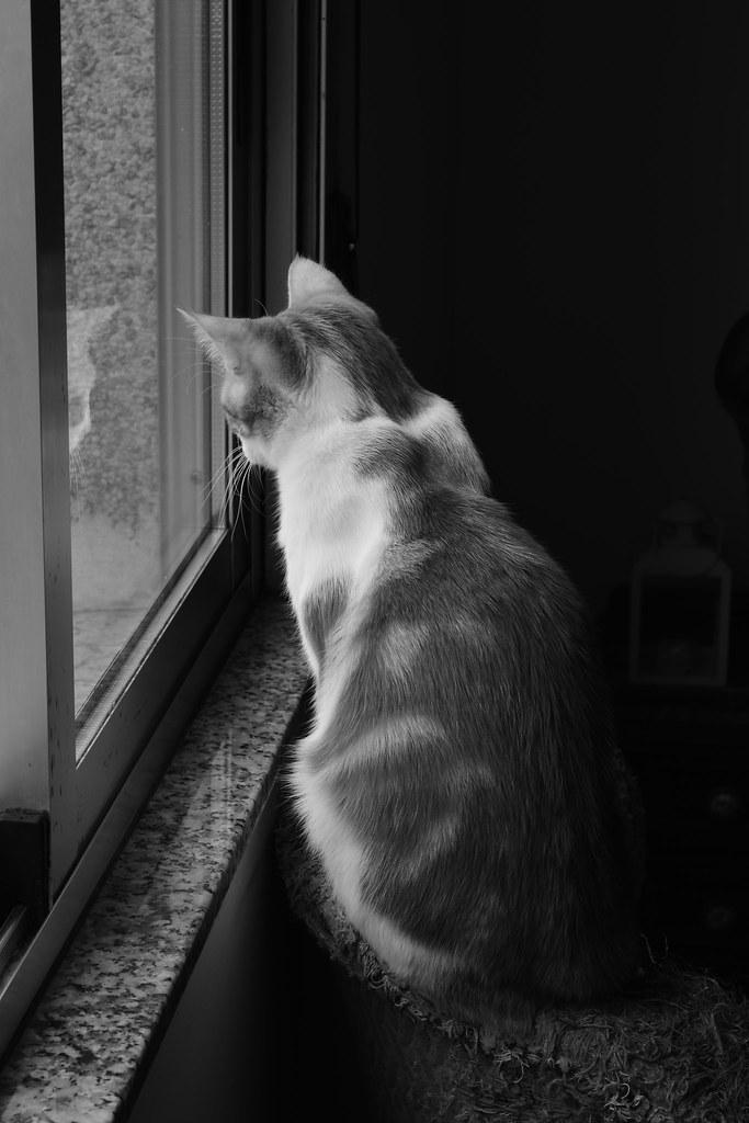 O vixía de Cerrallón