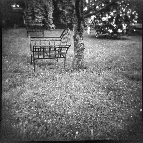 benches yard backyard wroughtiron blossoming shrub tree lawn westasheville northcarolina dianaf kodaktmax400 ilfordilfosol3developer lomography 120 120film film mediumformat blackandwhite monochrome monochromatic landscape
