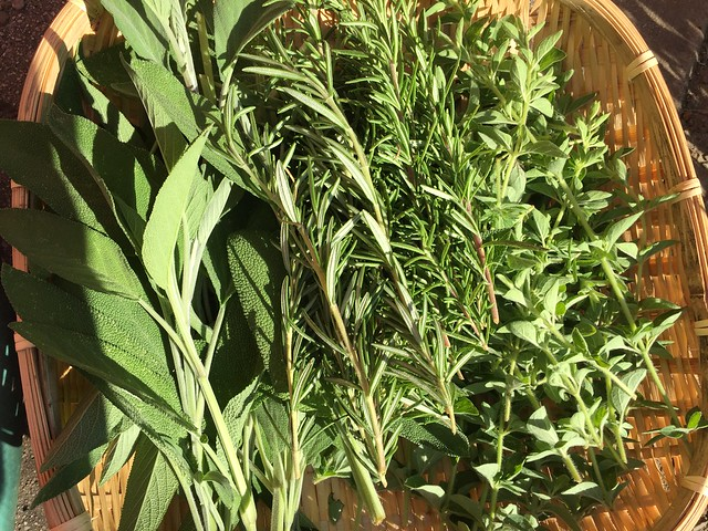 Herb de San Jose