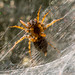 A Spider; the victim's perspective