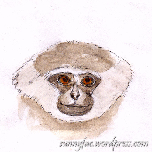 Silvery-Gibbon-watercolour-Sketch