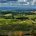 Toscana, Wineyards Country