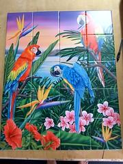 Parrot trio tile mural on 15.2cm tiles at £320  #tilemurals #kitchentiles #parrot #rainforest  www.tilemuralstore.co.uk