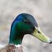 Ducks Weald Country Park