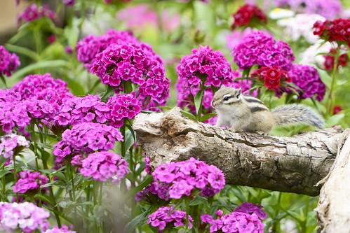 母の日の花選び