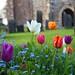 Wadhurst Churchyard  (East Sussex)
