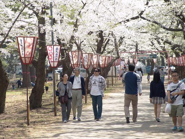 A sakura street