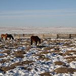 48062-002: Strategic Planning for Peatlands in Mongolia