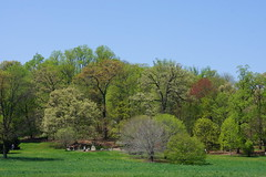 Arboretum in spring: Trees and azalea gardens seen from across the meadow