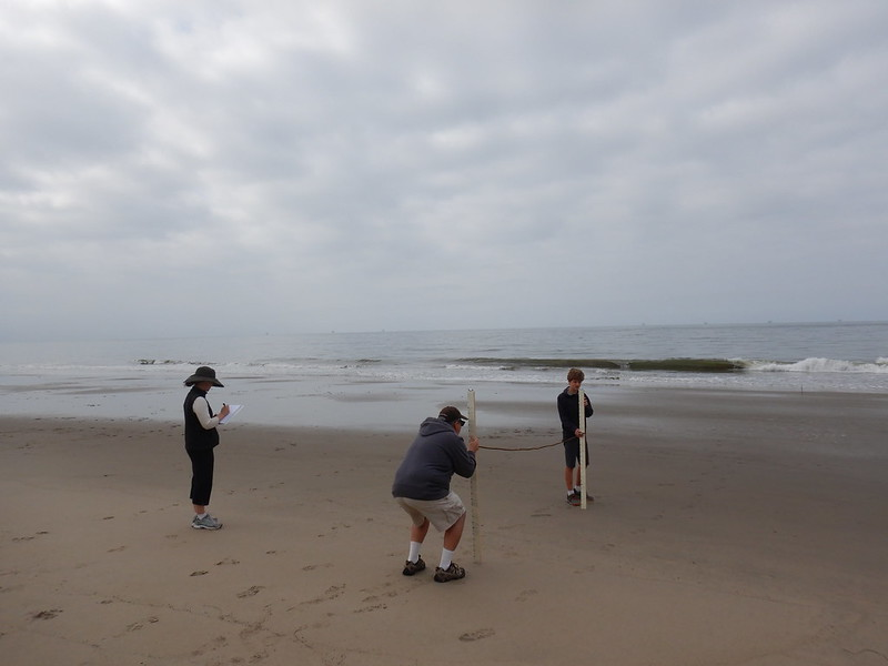 Citizen science on the beach