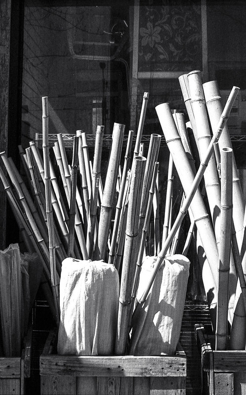 Bamboo for Sale_