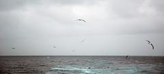 Underway in Antarctica