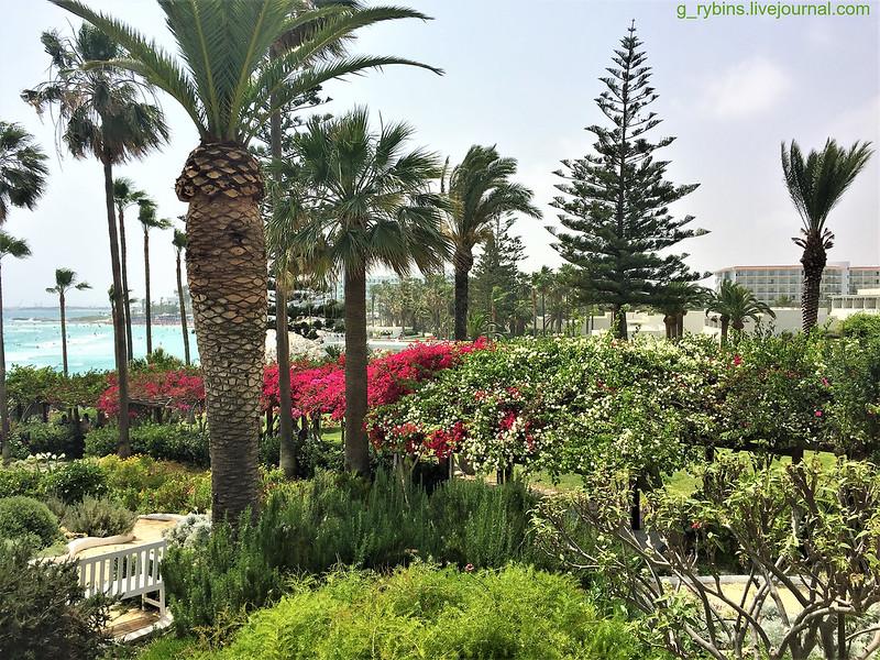 Нисси, Кипр