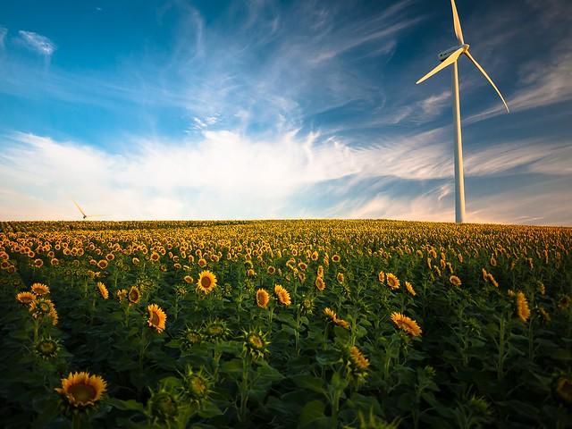 Transición economía baja en carbono