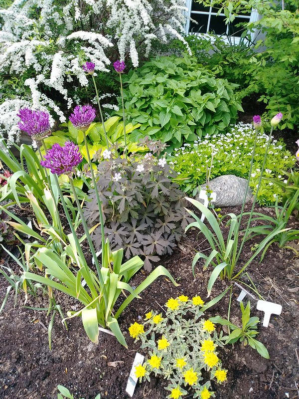 Le jardin de Lavandula 2018 - Page 6 41401079495_3a0c586530_c