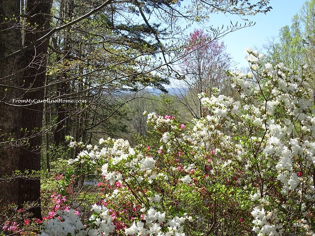 Late April Garden 2018 at From My Carolina Home