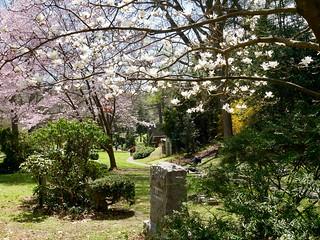 Spring blossoms, Mount Auburn Cemetery