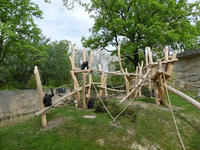 Außenanlage Gorilla, Zoo Berlin