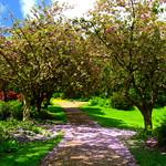 The blossom has fallen in Miller Park, Preston